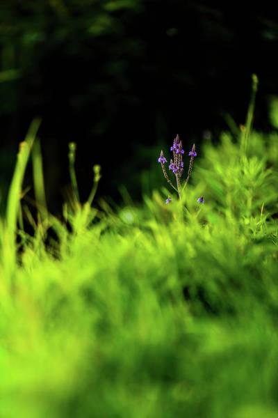 Photograph - Little Purple Flower by Onyonet  Photo Studios