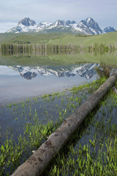 Wall Art - Photograph - Little Redfish Lake Vertical by Aaron Spong