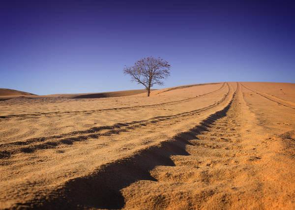 Atv Photograph - Little Sahara Tracks by Ricky Barnard