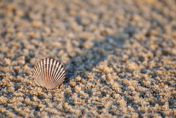 Photograph - Little Seashell - Jersey Shore by Angie Tirado