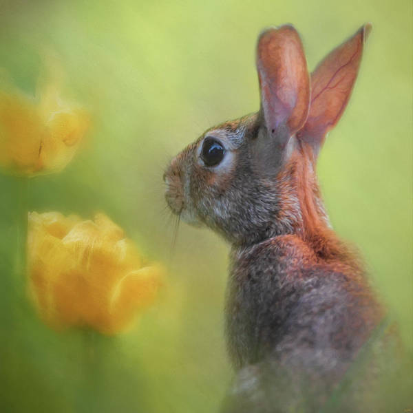 Photograph - Little Spring Seeker by Jai Johnson