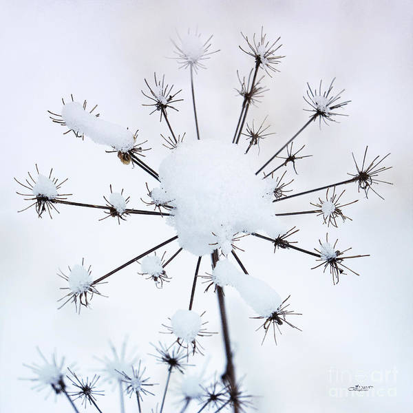 Photograph - Little Stars by Jutta Maria Pusl