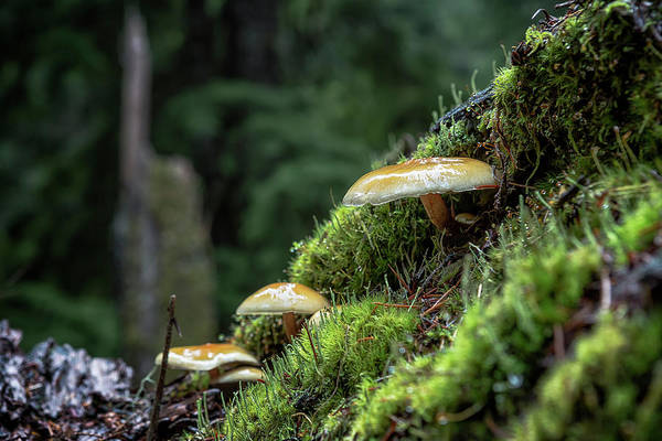 Photograph - Little Things In A Big Forest by Belinda Greb