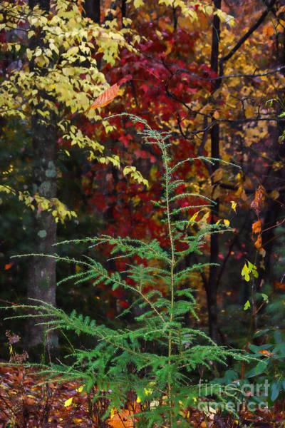 Photograph - Little Tree by Roberta Byram