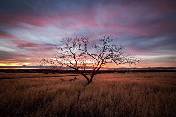 Photograph - Little Tree Sunset by Wesley Aston