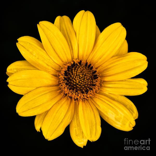 Photograph - Little Yellow Flower by Mark Miller