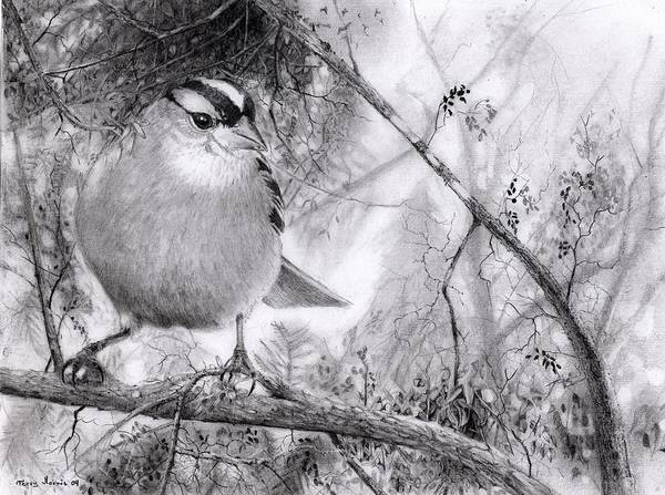 Starlings Drawing - Littlest Sparrow by Terry Morris
