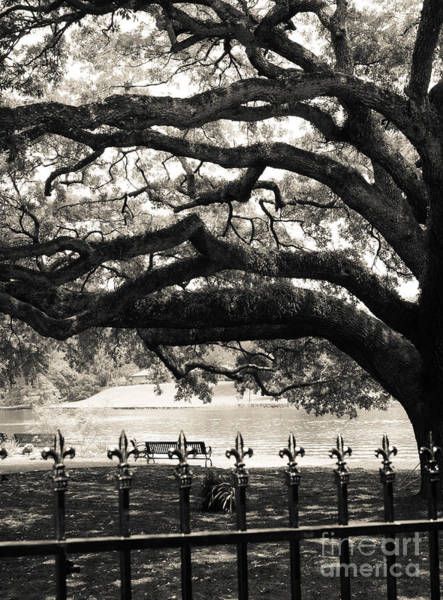 Photograph - Live Oak And Ironwork by Julia Rigler