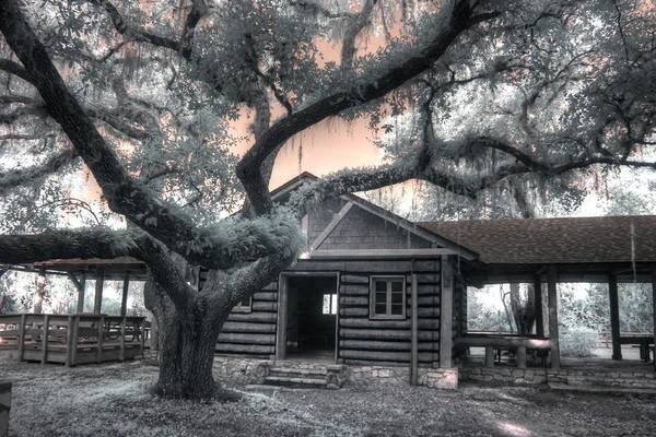 Wall Art - Photograph - Live Oak Log Cabin Myakka State Park Florida by Jane Linders