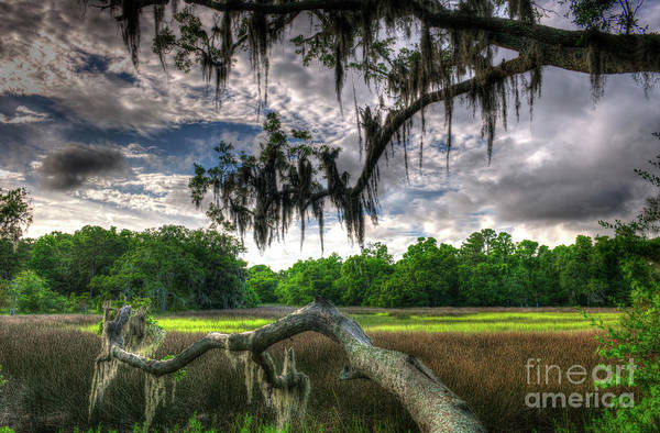 Photograph - Live Oak Marsh View by Dale Powell