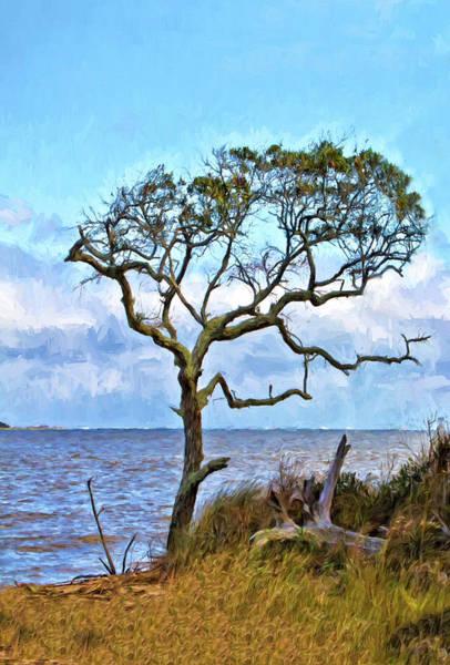 Sandra Anderson Wall Art - Photograph - Live Oak On Winyah Bay by Sandra Anderson