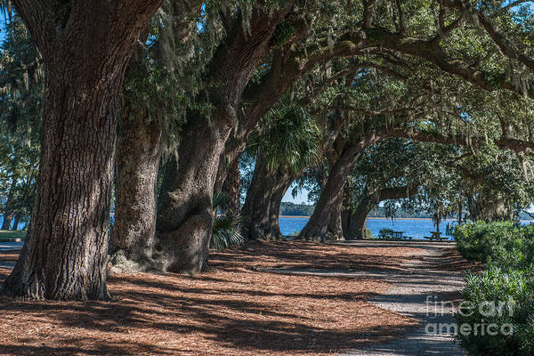Photograph - Live Oak Pathway by Dale Powell