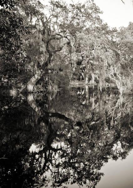 Photograph - Live Oak Reflections by Dustin K Ryan