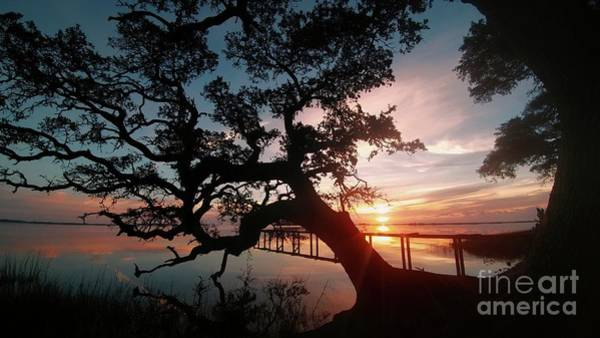 Coast Live Oak Photograph - Live Oak Sunrise by Benanne Stiens