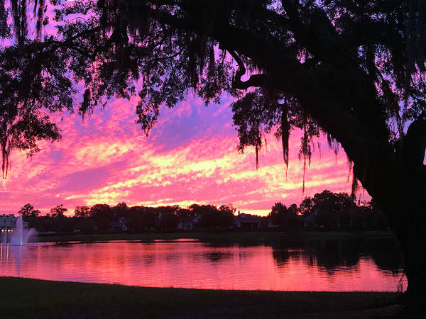 Photograph - Live Oak Sunset by Rick Locke