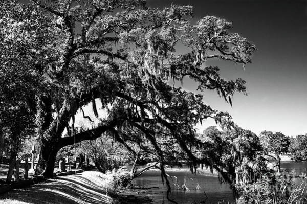 Photograph - Live Oak Tree Dripping With Spanish Moss Stretching To The Water by Dale Powell
