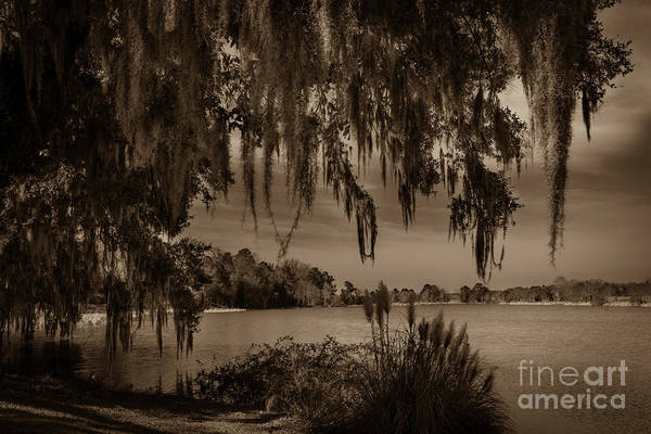 Photograph - Live Oak Tree Spanigh Moss Sepia Silhouette by Dale Powell