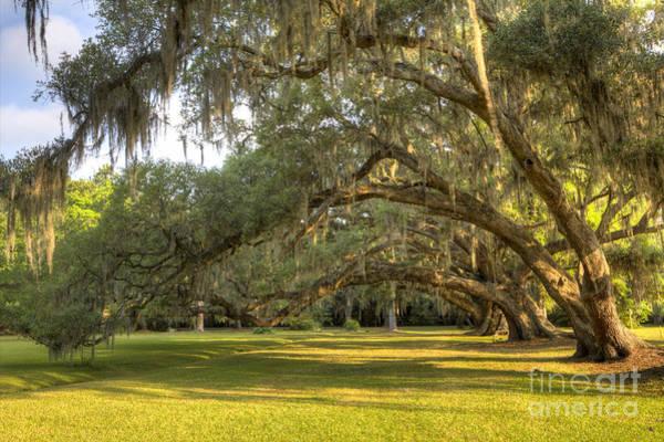 Photograph - Live Oak Trees Sunrise by Dustin K Ryan
