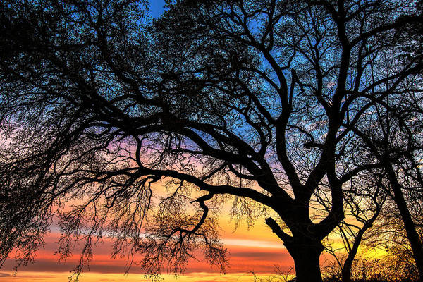 Photograph - Live Oak Under A Rainbow Sky by John Harding
