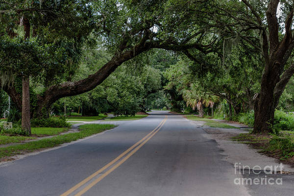 Photograph - Live Oaks In Mcclellanville by Dale Powell