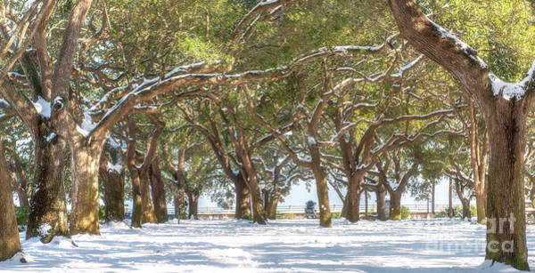 Photograph - Live Oaks In Snow by Dale Powell