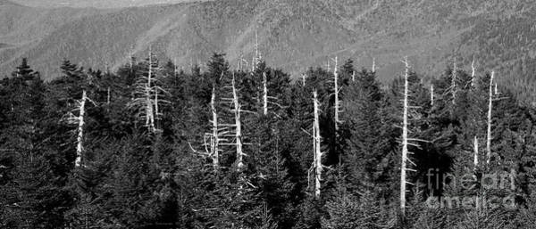 Wall Art - Photograph - Living And Dying On Clingmans Dome by John Stephens