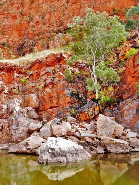 Photograph - Living In The Rocks - Ormiston Gorge by Lexa Harpell