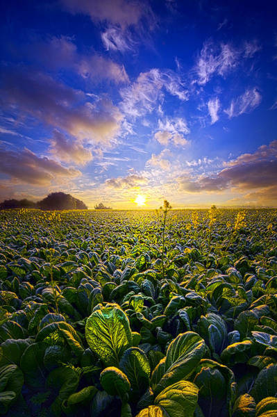 Photograph - Living Off The Land by Phil Koch