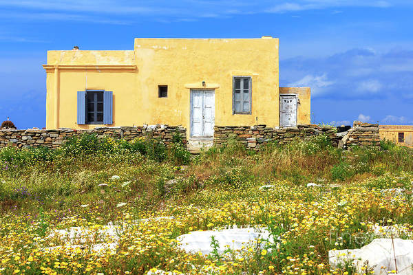 Photograph - Living Wild On The Island Of Delos by John Rizzuto