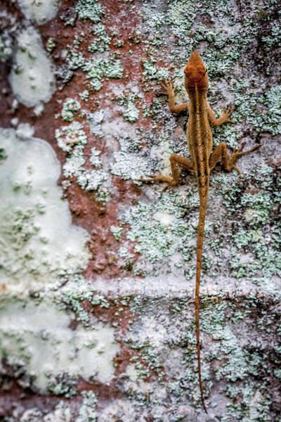 Photograph - Lizard And Lichen On Brick by Susie Weaver