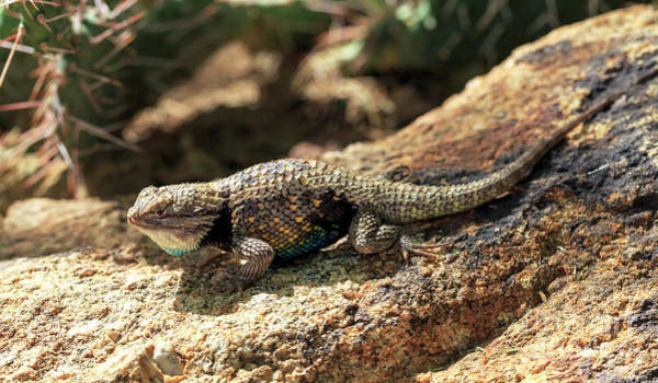 Photograph - Lizard Camouflage by John Rizzuto