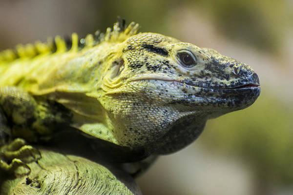 Photograph - Lizard by Gary Lengyel