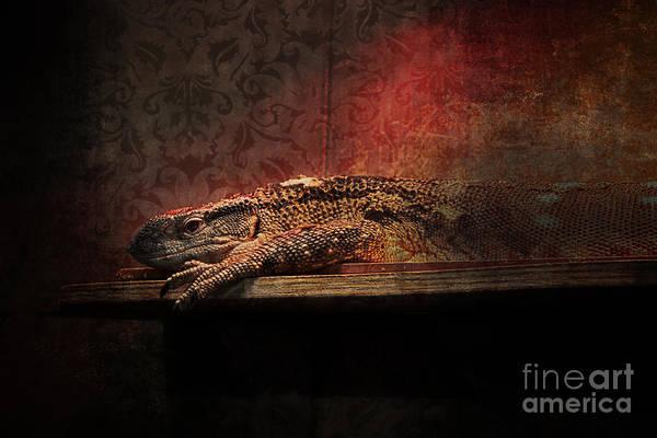 Photograph - Lizard by Doc Braham