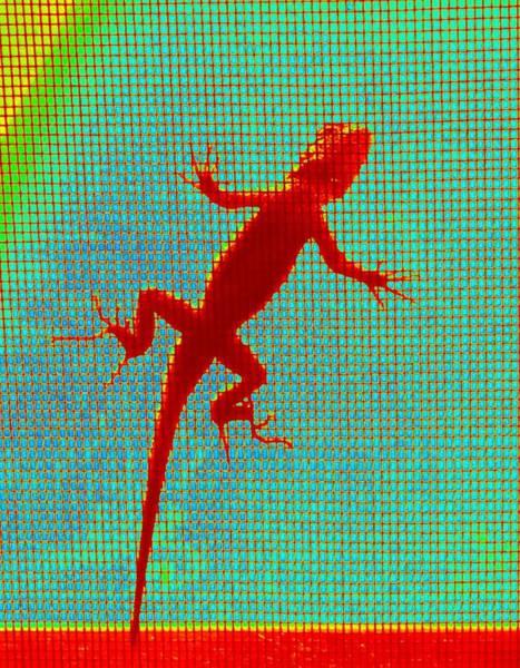 Lizard On The Screen Art Print