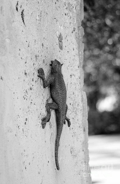 Photograph - Lizard Sculpture by Julia Rigler