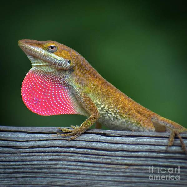 Critters Photograph - Lizardry by Skip Willits