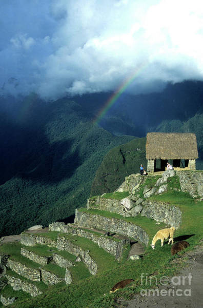 Photograph - Llama And Rainbow At Machu Picchu by James Brunker