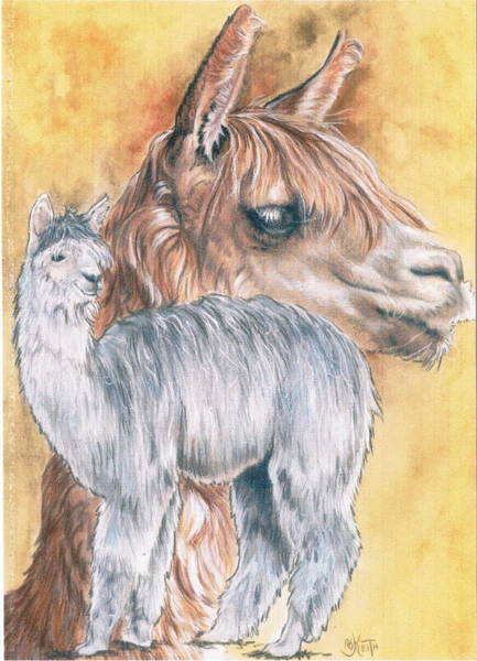 Mixed Media - Llama by Barbara Keith
