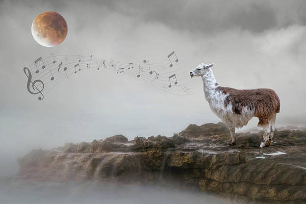 Wall Art - Photograph - Llama Singing To The Moon by Rebecca Cozart