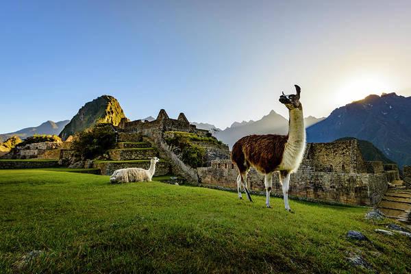 Wall Art - Photograph - Llamas At The Ruins by Oscar Gutierrez
