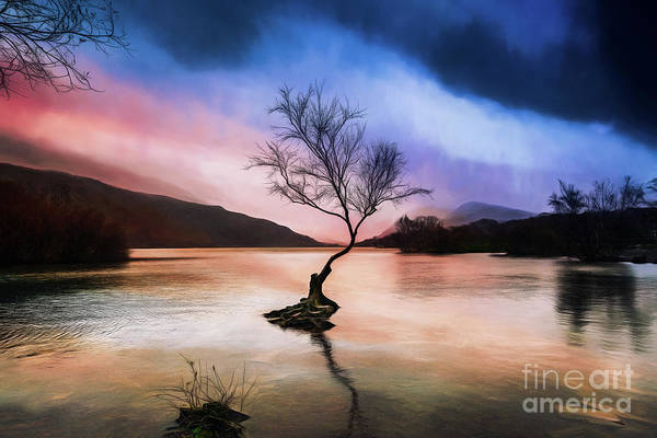 Wall Art - Photograph - Llanberis Lake Tree by Adrian Evans