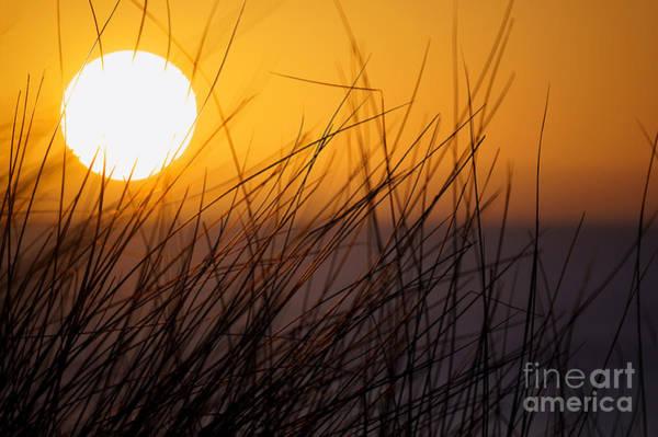 Photograph - Llangennith Sun by Minolta D