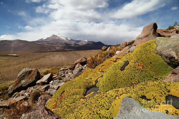 Photograph - Llareta Plants And Guallatiri Volcano Chile by James Brunker