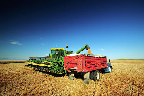 Photograph - Load Of Wheat by Todd Klassy