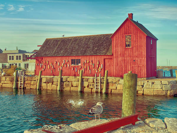 Photograph - Lobster Shack by Mick Burkey