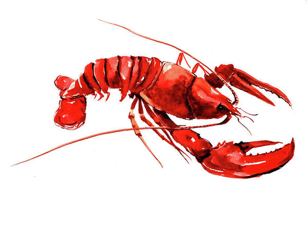 Wall Art - Painting - Lobster by Suren Nersisyan