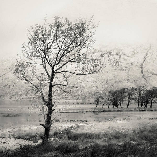 Photograph - Loch Etive Tree by Dave Bowman