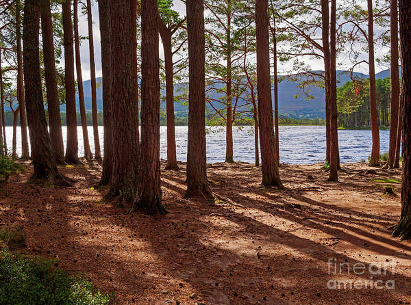 Garten Wall Art - Photograph - Loch Garten And The Abernethy Forest by Louise Heusinkveld