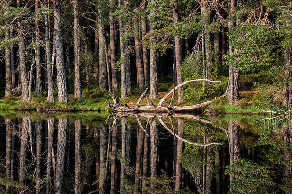 Photograph - Loch Garten by Arterra Picture Library
