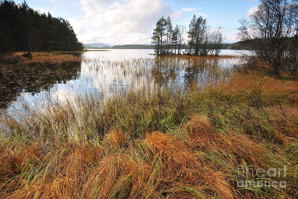 Garten Wall Art - Photograph - Loch Garten by Smart Aviation